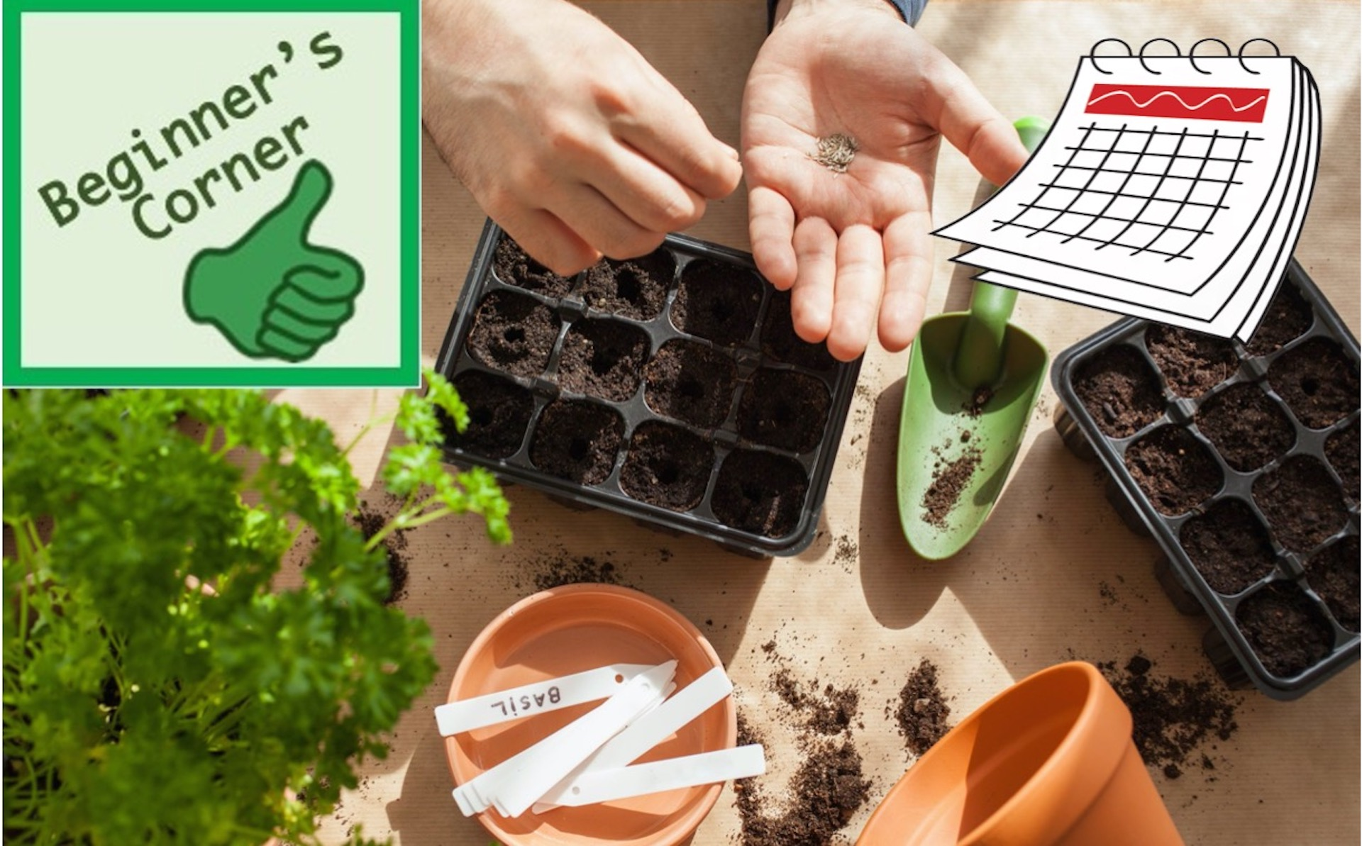 Hand sowing seeds in cell pack.