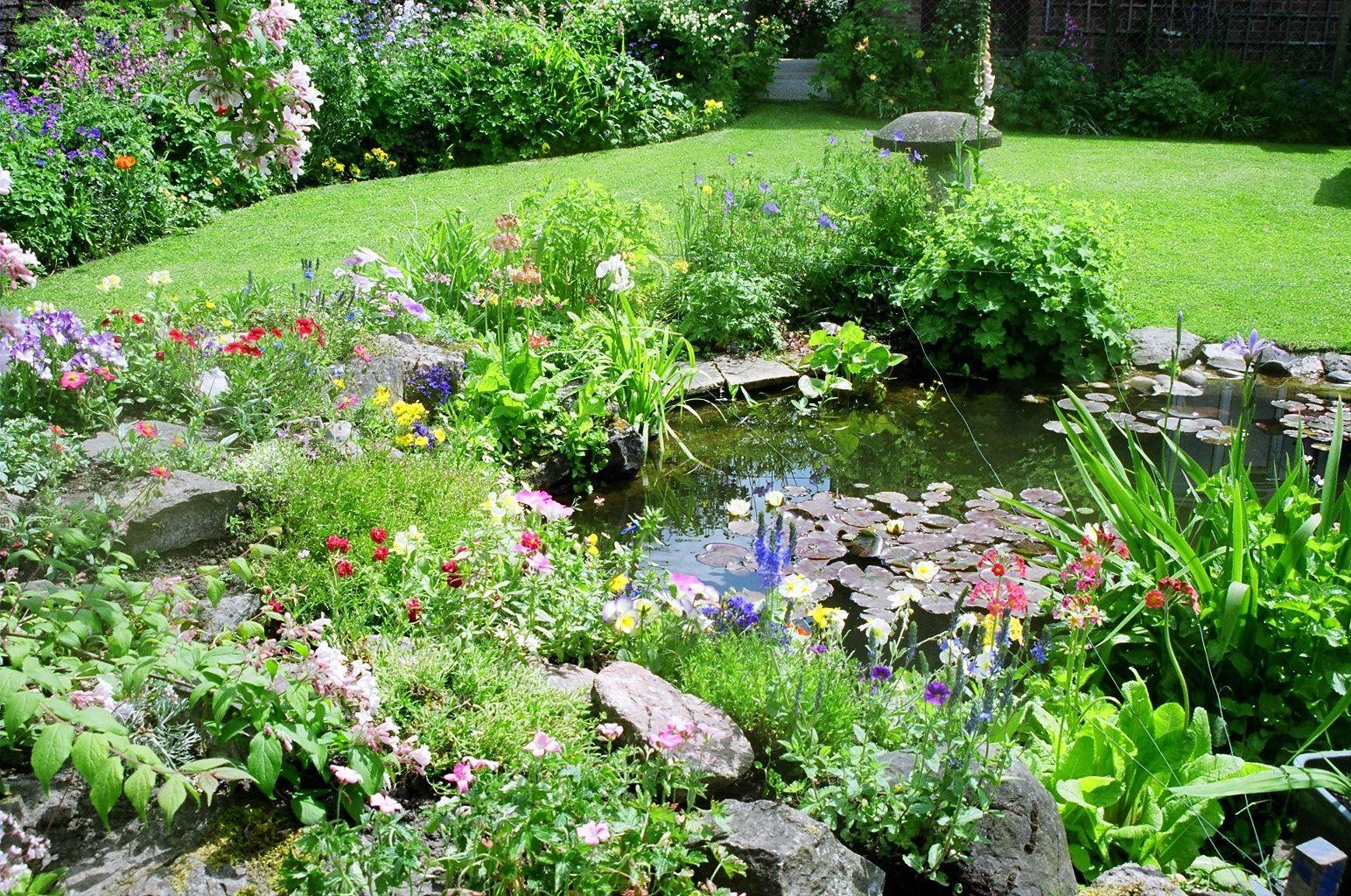 Wildlife garden with pond
