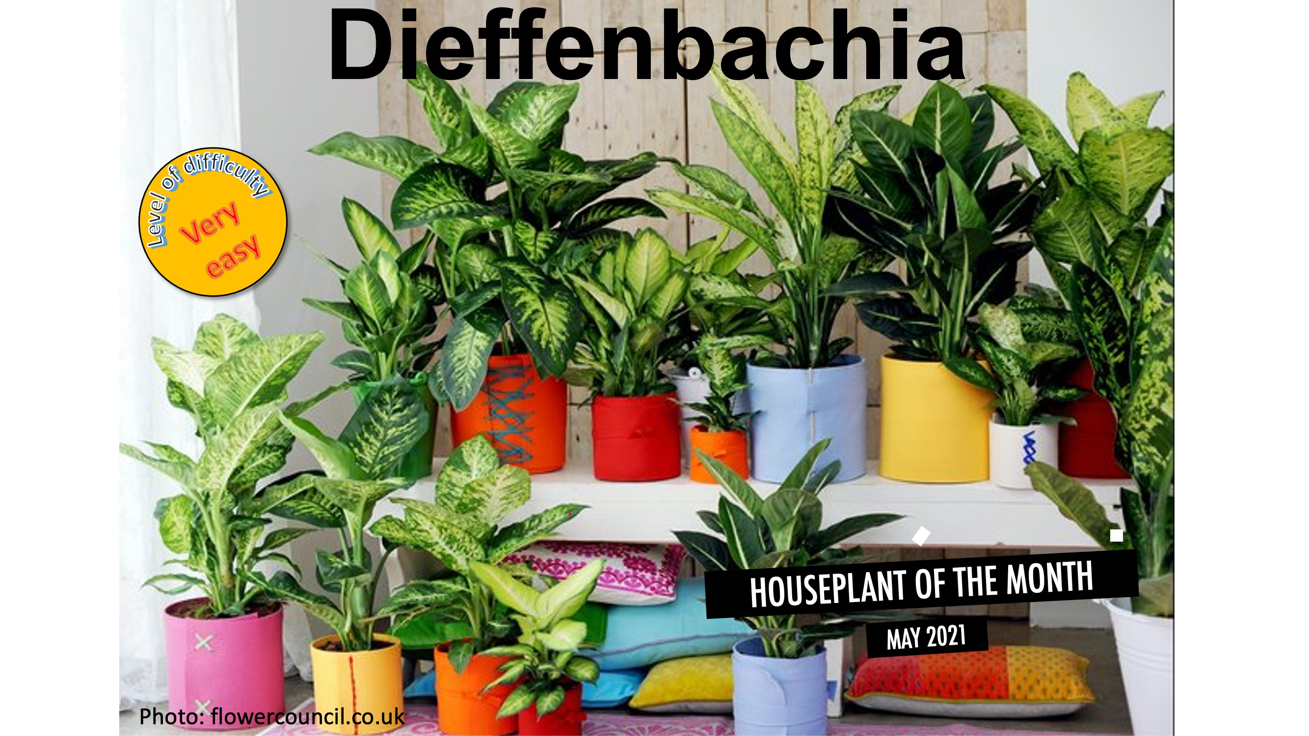 Many different dieffenbachias on two levels.