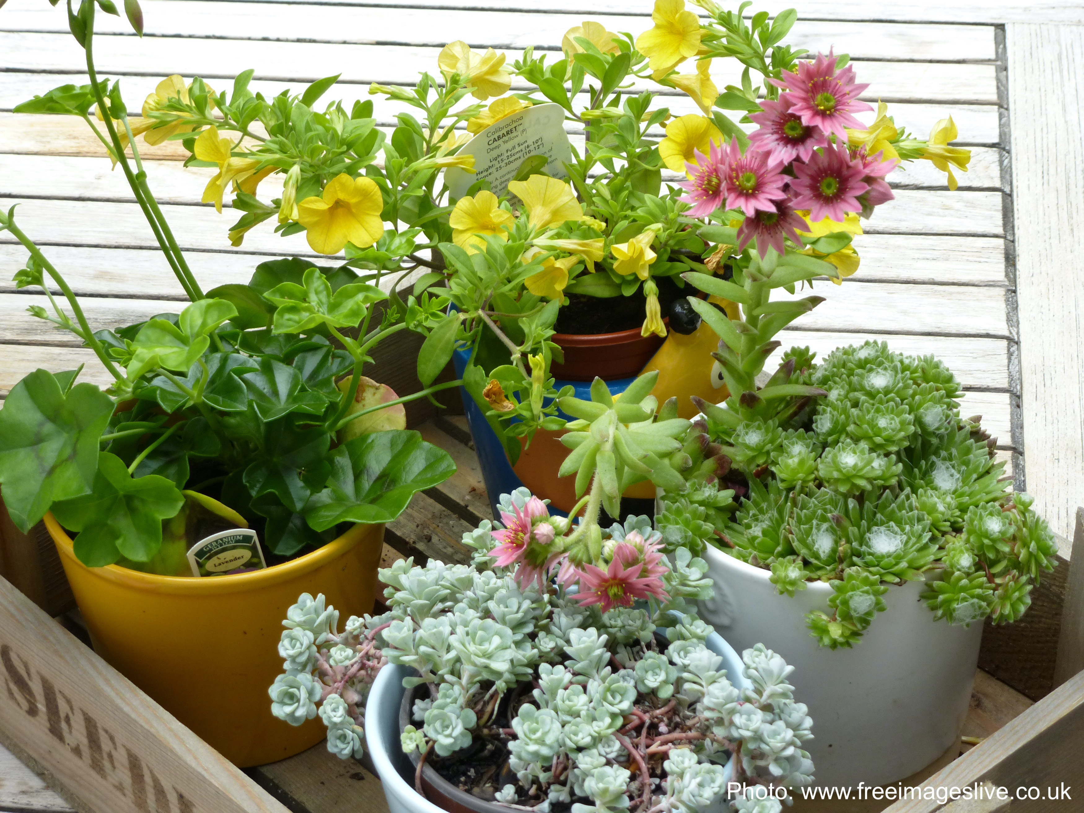 Tray of houseplants read to bring in for the winter.
